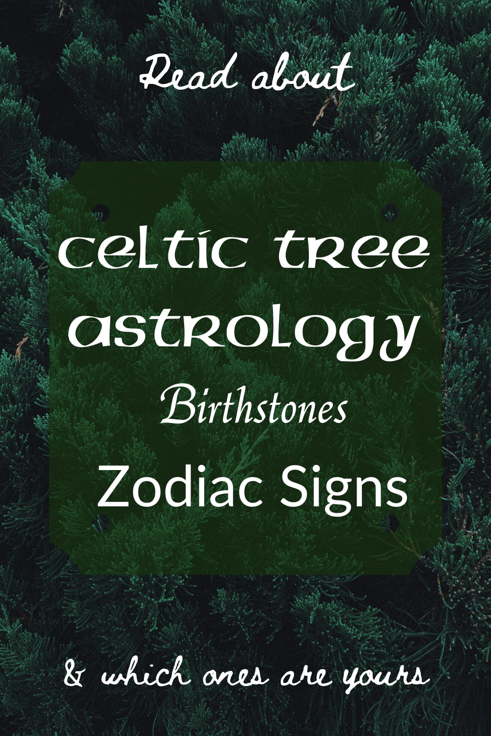 Celtic Tree Astrology  Birthstones  Zodiac Signs